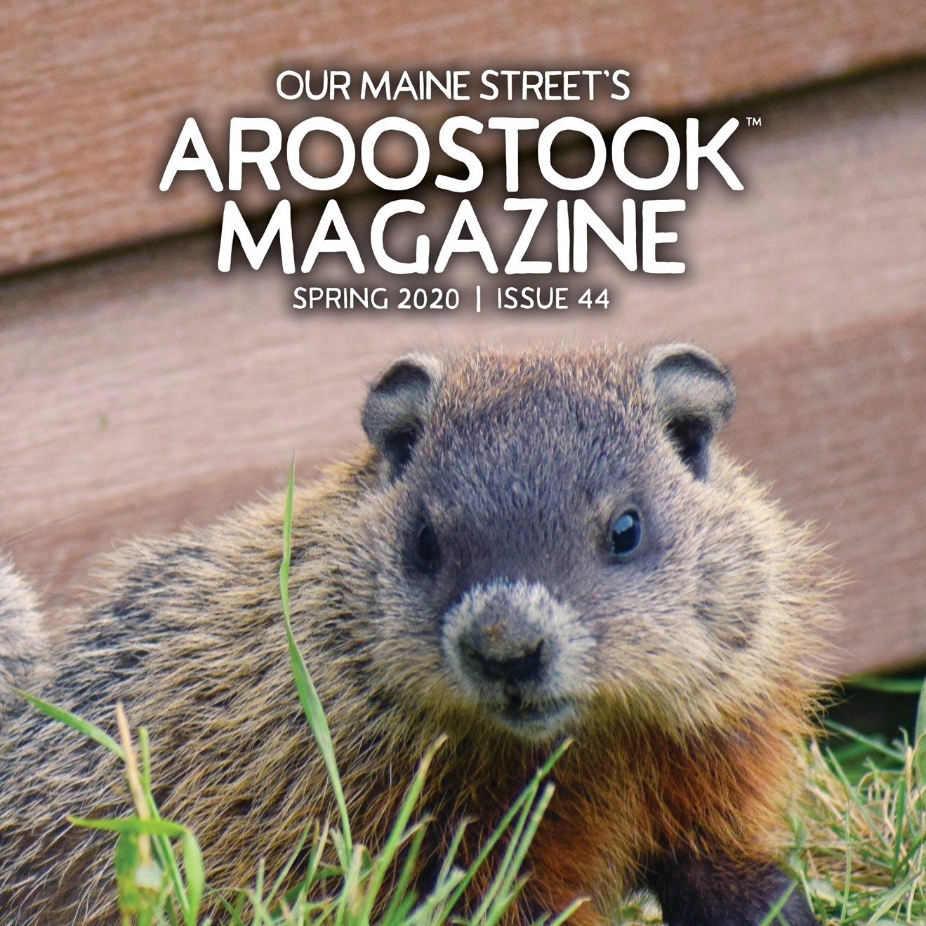 Our Maine Street cover image with groundhog